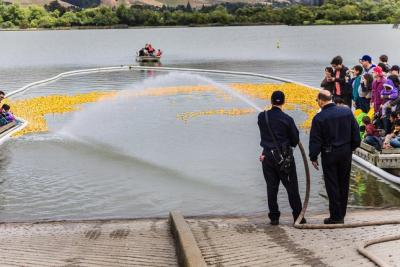 Fremont firefighters use a fire hose to push thousands of rubber ducks to start Saturday's Ducks For Bucks benefit race at Lake Elizabeth in Fremont. Photo by James Sakane