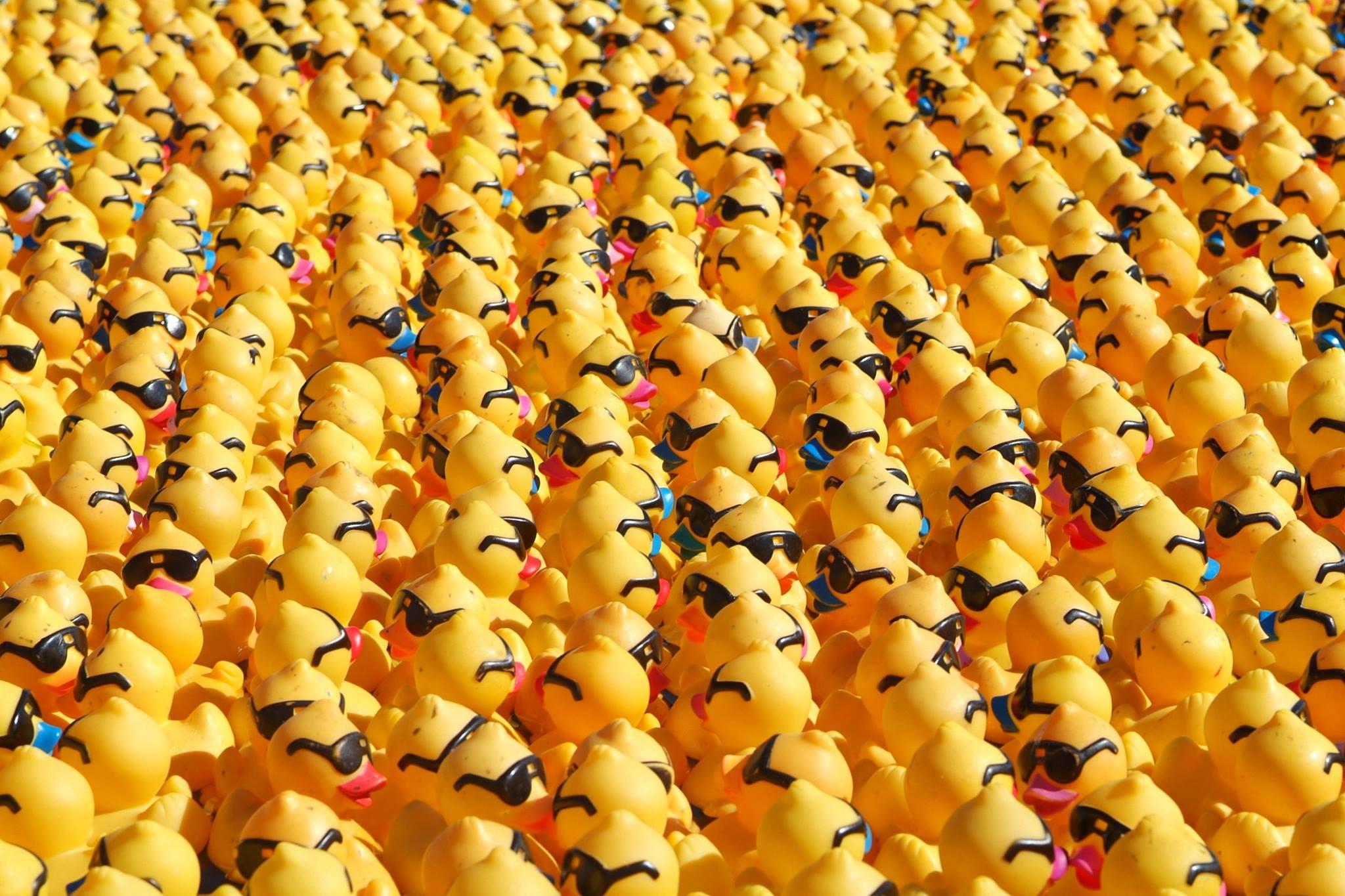 Great Puget Sound Ducks Racing