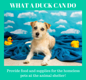 Provide food to homeless pets