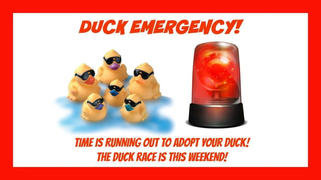 Ideas to encourage last minute duck adoptions