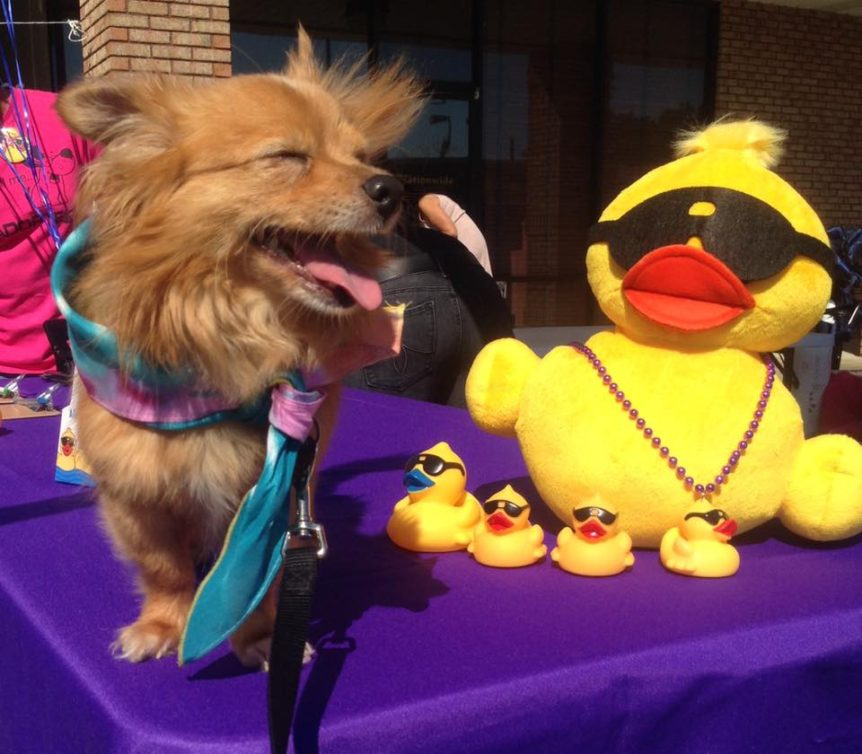 Tired Dog Rescue Duck Derby this Weekend