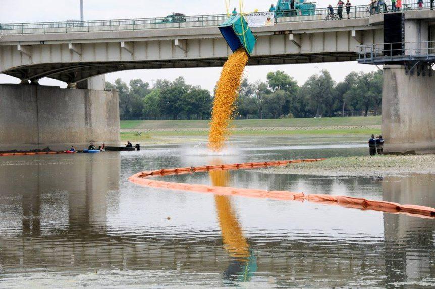 Duck race in river