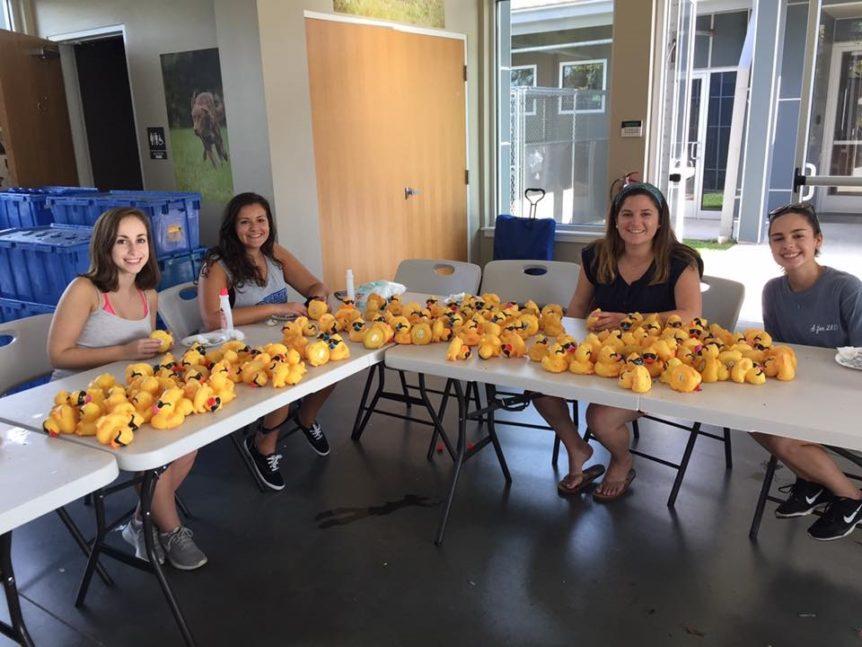 50,000 rubber ducks racing to start October