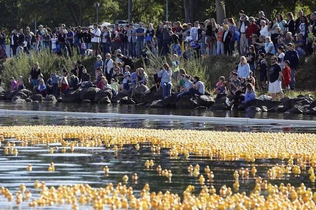 Mid-Columbia Duck Race