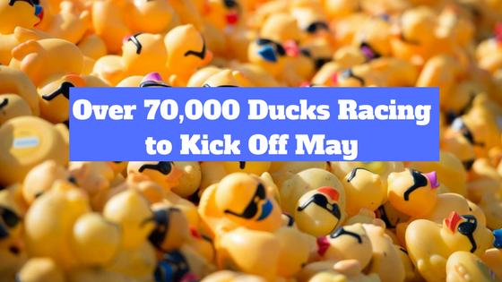 Over 70,000 ducks racing to kick off May