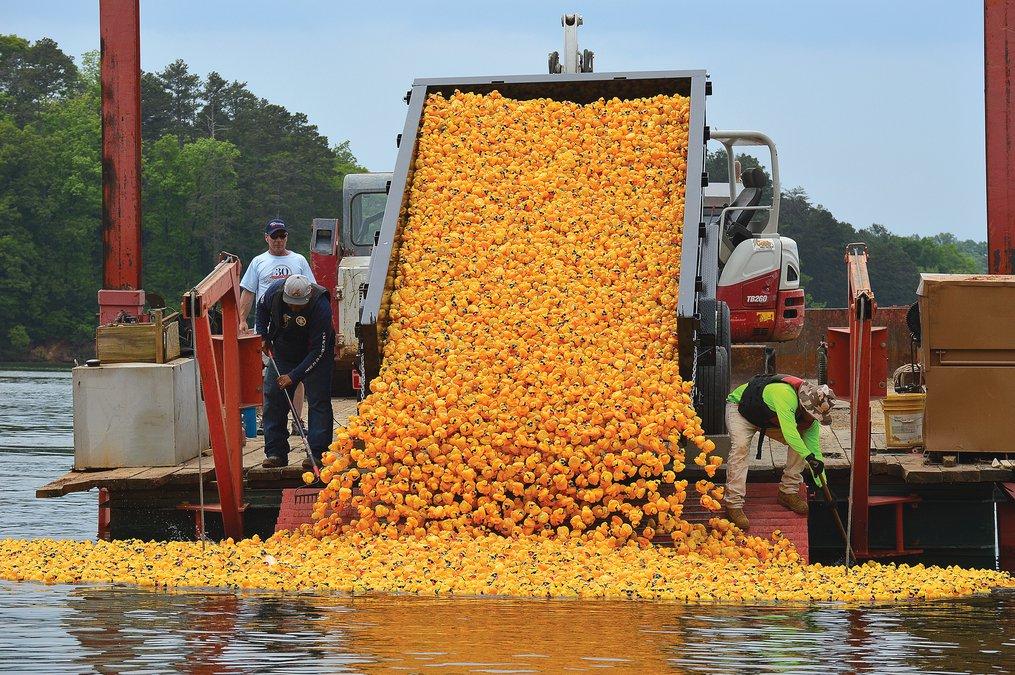 Gainesville Rubber Duck Derby, Duck Derby, rubber duck race