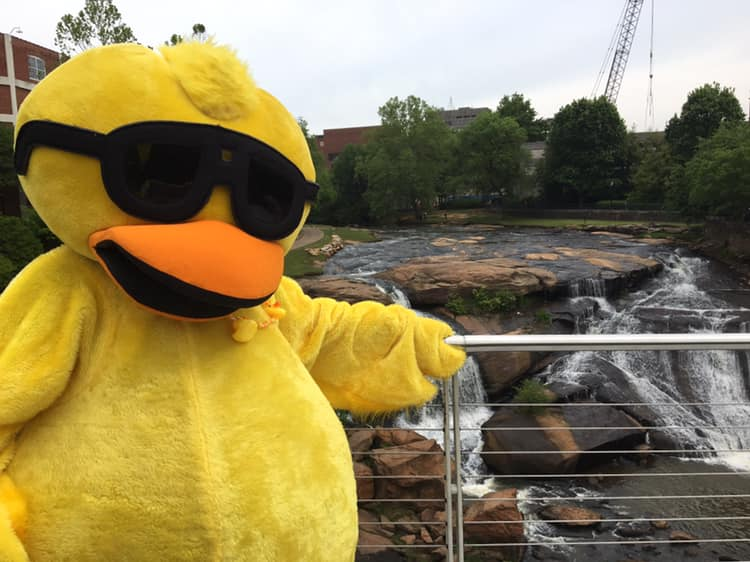 Reedy River Duck Derby, Duck Derby, Greenville